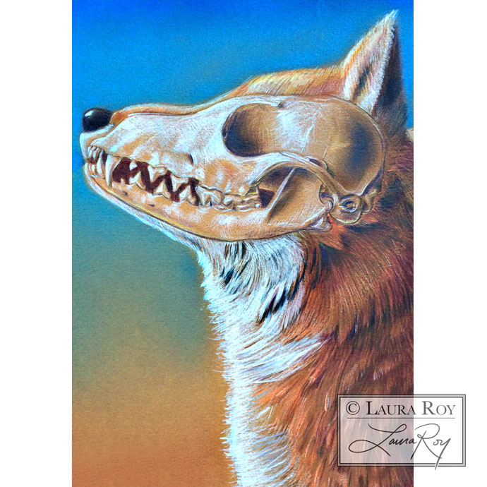 Roy Biomedical Illustration Fox Skull
