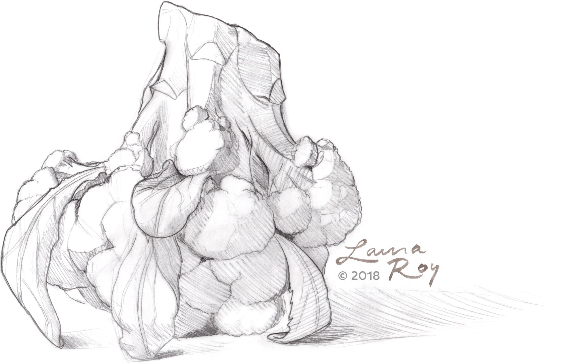 Roy Illustration Broccoli Pencil Sketch