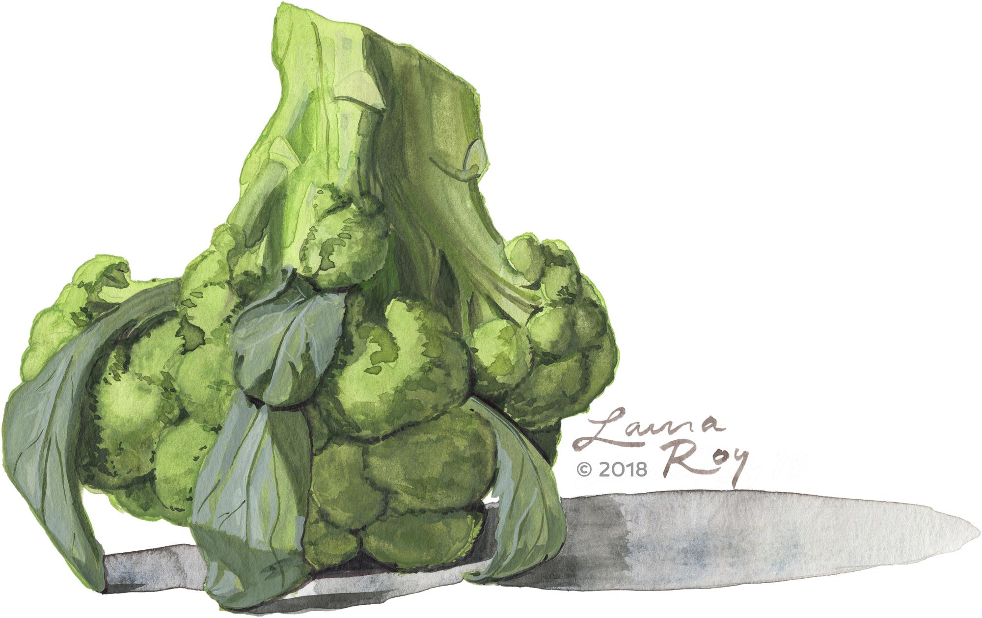 Roy Illustration Watercolor Broccoli