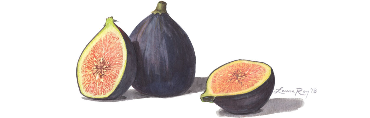 Roy Medical Watercolor Figs