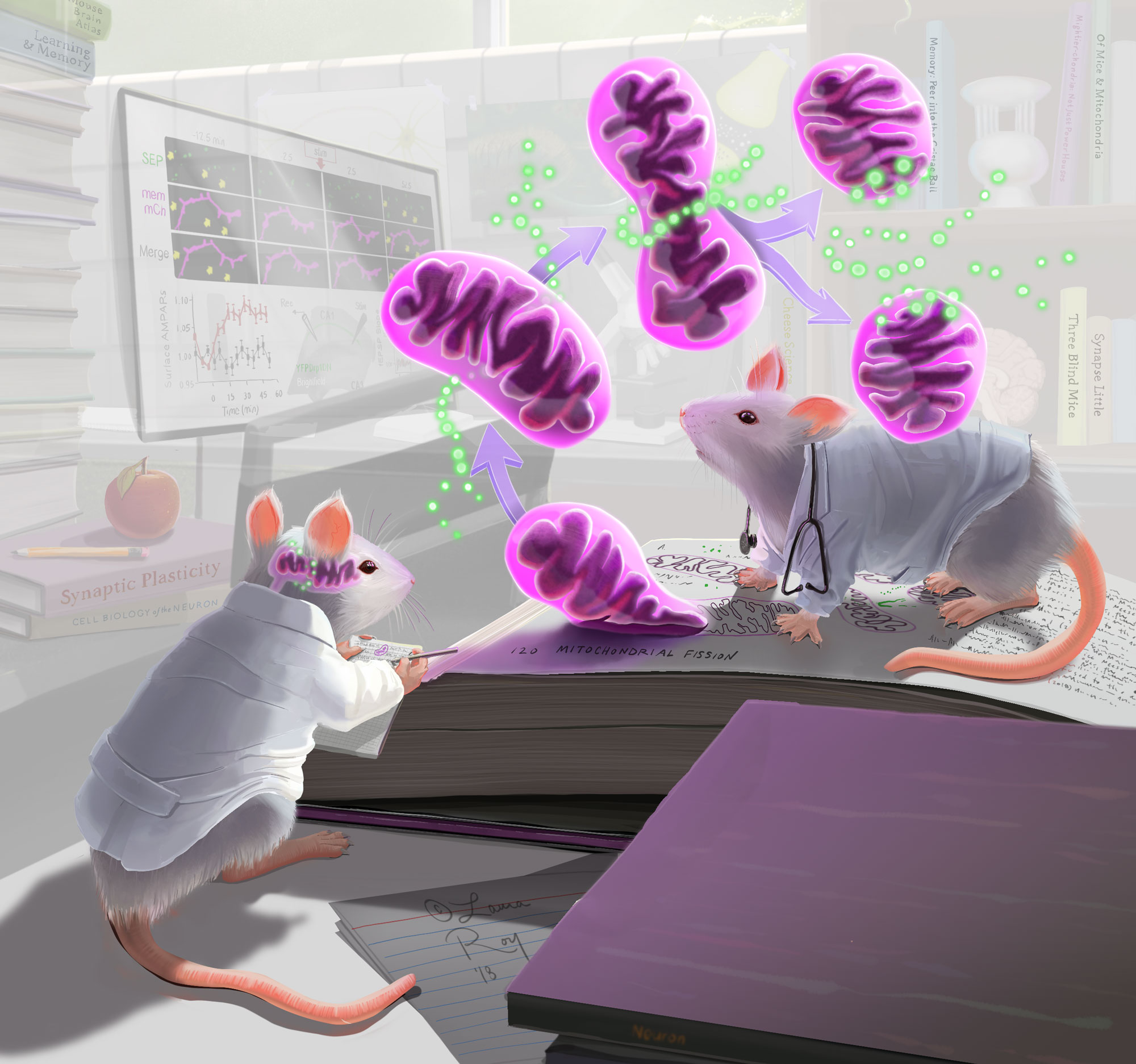Roy Illustration Mitochondria Mice Visual