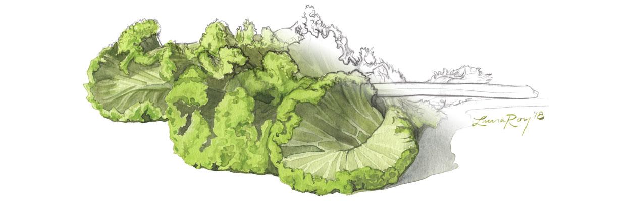 Roy Watercolor Mustard Greens