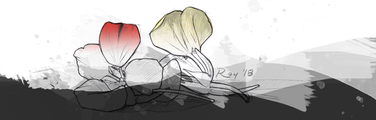 Roy Illustration Nasturtiums Watercolor Banner