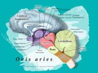 Roy Biomedical Illustration
