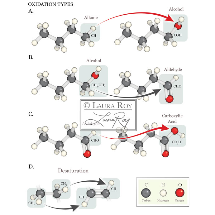 Roy Biomedical Illustration Oxidation