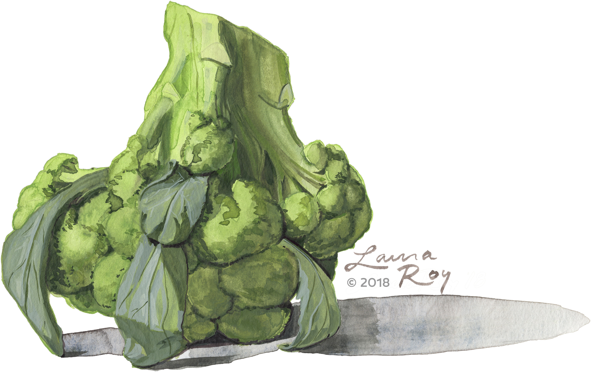 Roy Illustration Watercolor Broccoli
