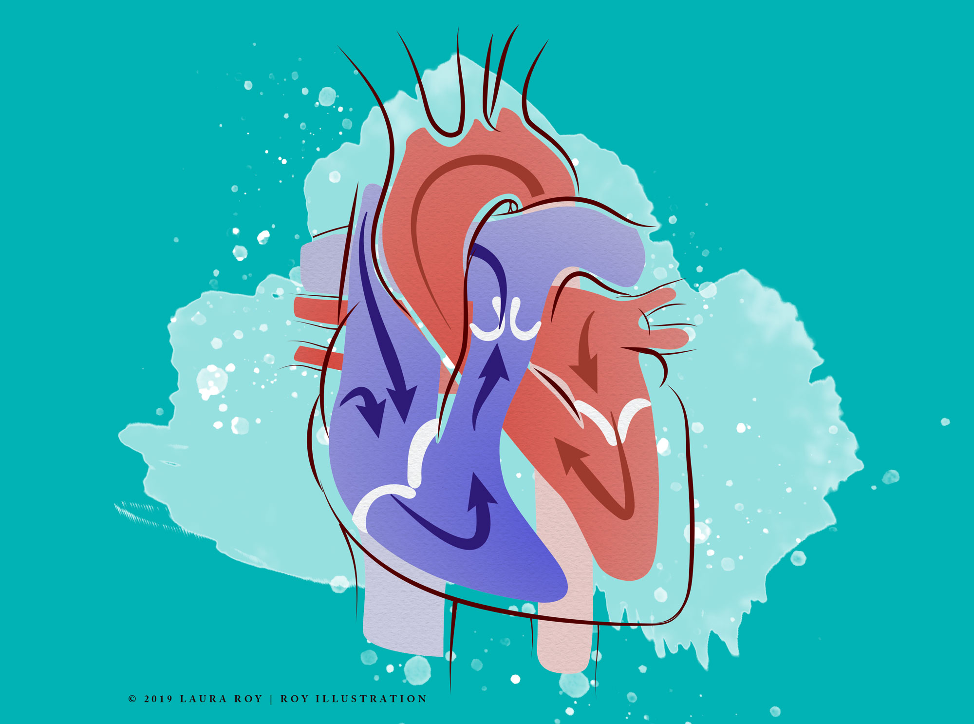 Roy Biomedical Illustration Heart